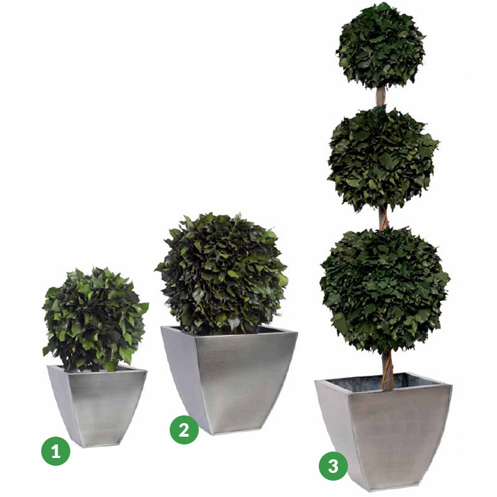 Hedera Hedera ball Topiary