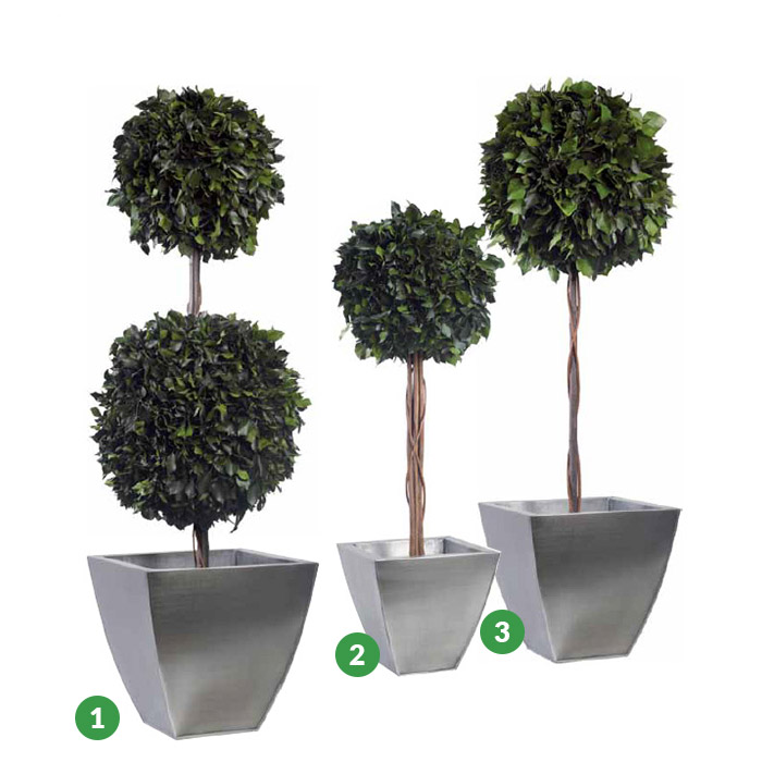 HEDERA Hedera 2 ball Topiary